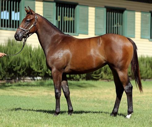 Hinchinbrook Redwood Dancer