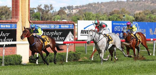 Rock On Zariz wins Stan Sadleir at Wagga