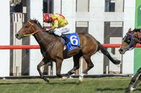 D'Beak sets sights on Wagga Cup