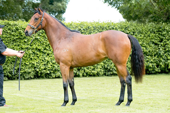 Reliable Man Filly