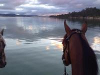 Tasmanian Double for Epingle