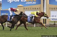 Promising stayer Varboss wins stable debut