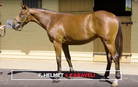 Helmet X Caraveli