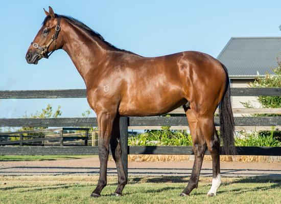 Fiorente X Free Friday Yearling Colt