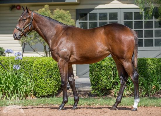Not A Single Doubt X Lady Oracle Yearling Filly