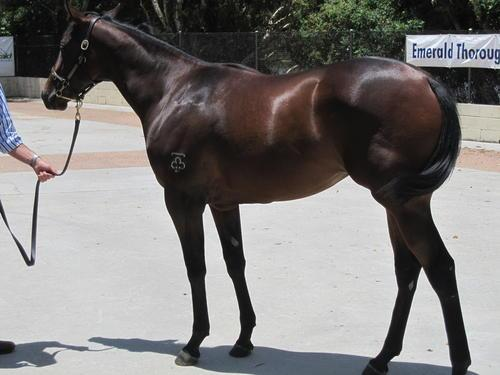 All sold -  3/4 2YO sister to Calchris - she's a nice buy.