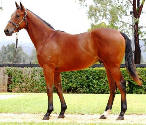 Edmonds stable purchased two colts on day two of the Magic Millions