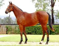 Edmonds Stable Phelan Ready for Magic Millions success