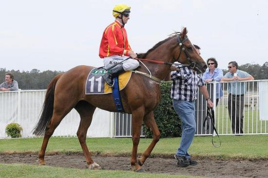 Talented Mare Puts Opposition to Bed