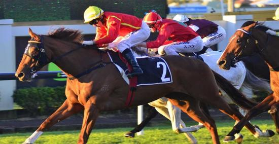 Sagaronne remains in contention for Sydney trip