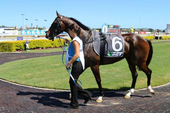 Our Boy Nicholas Will Head Queensland Invasion Of Thursday's Ballina Cup