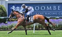 Houtzen on borderline for Magic Millions