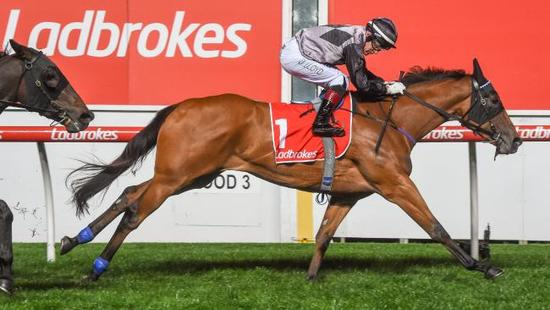 Gold Coast filly Houtzen gets a feel for Flemington straight course