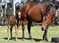 BREEDING SHARES FOR SALE...