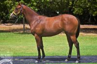 New Magic Millions Filly Joins Our Team