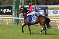 NEW HORSE FOR PERTH!