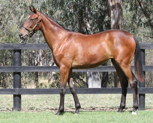 Introducing Our First Yearling For 2015..