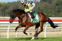 NEW HORSE NEW HORSE! NSW Stayer heading for Perth....
