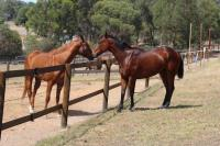 Here Are Two Horses On A 'Pay Only Out Of Prizemoney' Deal!