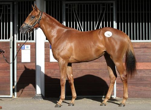 NZ Bred Makfi Filly Joins The Team!
