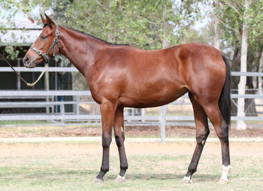 NEW SUPER VOBIS FILLY IN VICTORIA!