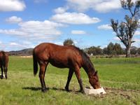 Free Shares in NSW Yearling Filly...