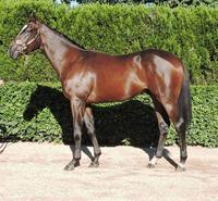 Torryburn Stud partners with Greg Eurell in Offering a stunning Snitzel Colt