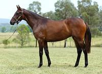 Domesday chimes in with another two Stakes winners