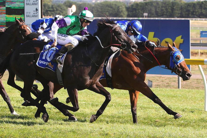 Rezak - The Working Man's Horse