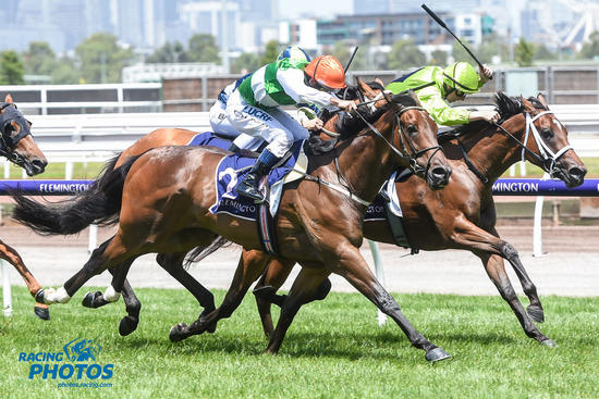 GREG EURELL HOPES MATURITY WILL MAKE A HORSE OF O'TAUTO