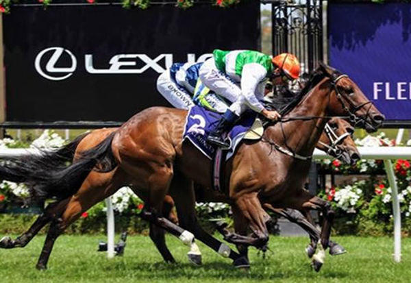 Larneuk Stud Bred Duo Chasing $500,000 Melbourne Cup Country Final