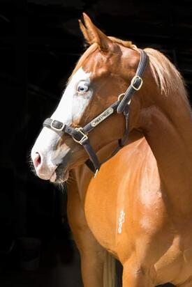SAPPHIRE SIOUX HAS THE LOOKS TO MATCH FAMED APACHE CAT