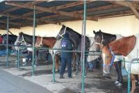 Stalls at the Kilmore Racecourse Our light and airy stables