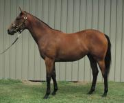 Shares available still in 3/4 blood sister to G1 winner Lucia Valentina