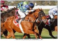Heart Of A Lion & Conservatorium With Great Returns
