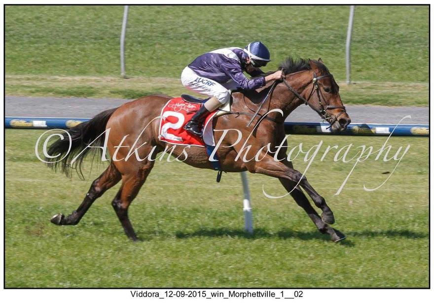Viddora & Get The Nod To Gallop Between Races Saturday