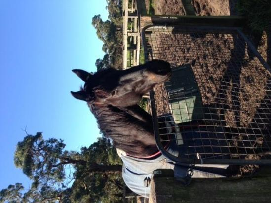 Limited shares available in 2 year old gods own gelding