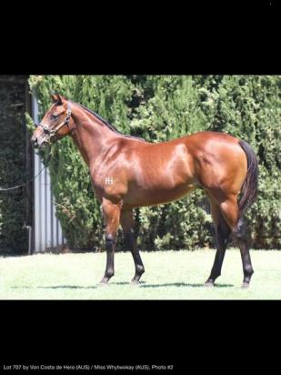 Von Costa de hero yearling colt