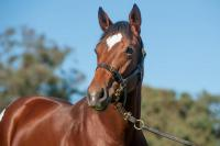 Join in the fun of racing with this Bianconi filly