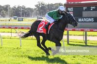 Childs Salutes on Black Opal