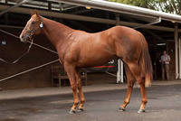 Group One Bound Son of Snitzel Heading for Kitchwin Hills