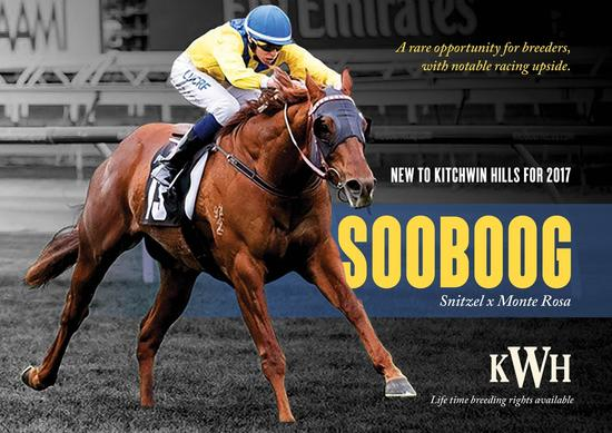 Sooboog Stallion Brochure