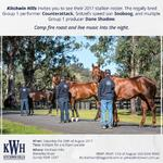 Kitchwin Hills 2017 Stallion Parade