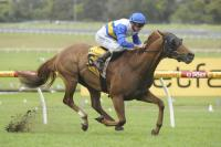 Sea Galleon Surges Towards Sydney Christmas Cup 2011