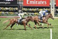 Mihalic outstanding in Flemington debut