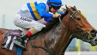 Manageress Back On Track for Spring Success