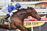 Chasing the VOBIS Gold at Caulfield