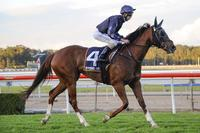 Gerald Ryan's Mollyfied to back up at Warwick Farm
