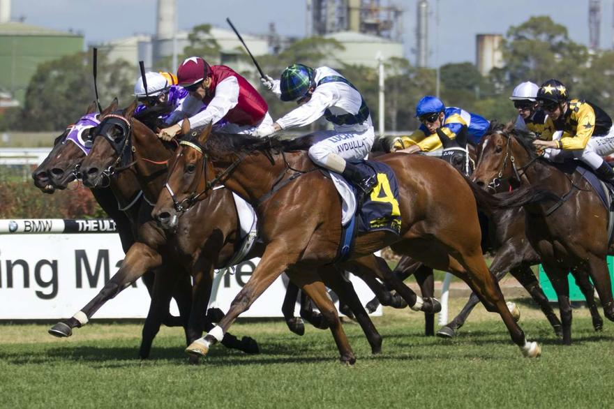 Red Excitement in Civic Stakes assignment