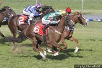Race_Image_cashed (4).jpg